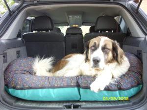 Familienhund #1, unterwegs